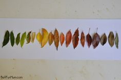 Go hunting for rainbow leaves and sort them into colour gradient. (to fit with scavenger hunt) Apple Activities, Autumn Activities For Kids, Fun Crafts For Kids, Projects For Kids, Preschool Activities, Nature Activities, Autumn Crafts, Nature Crafts, Holidays With Kids