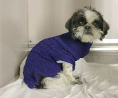SUPER URGENT 03/26/16 Manhattan Center OREO – A1068554 NEUTERED MALE, WHITE / BLACK, SHIH TZU MIX, 8 yrs OWNER SUR – STRAY WAIT, NO HOLD Reason PERS PROB Intake condition EXAM REQ Intake Date 03/26/2016, From NY 10466, DueOut Date 03/29/2016,