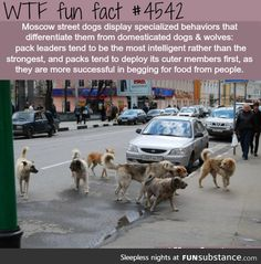 clever Moscow dogs:)