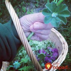 Detox, Herbs, Ale, Plants, Ale Beer, Herb, Plant, Ales, Planets