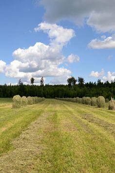 2012 luomuviljelty peltoala oli 9 % kaikesta Suomen peltoalasta. Kuvassa perinteistä heinäntekoa Heinolan luomutilalla