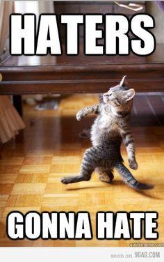 Haters gonna hate - feline version.