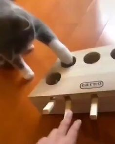 Game no good – Riri - Baby Animals Funny Animal Memes, Animal Quotes, Funny Animal Pictures, Cute Funny Animals, Cat Memes, Cute Baby Animals, Funny Cute, Animals And Pets, Cute Cats