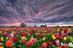 Fêtons l'arrivée du printemps avec 15 magnifiques champs de fleurs !