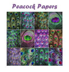 PEACOCK FEATHERS Paper Pack Digital Papers  12 by DigitalAlice