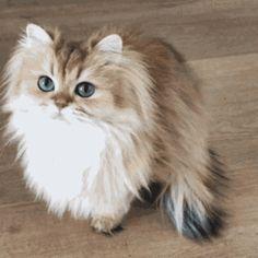 Torden katte porno