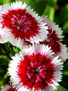 white with red flowers | Leave a Reply Cancel reply