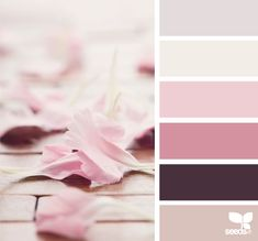 Color Palette • Shades Of Pink