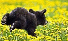 Little Black Bear Cub on the Run.