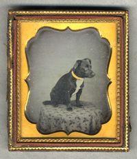 Nero, the Barton family dog 6th plate daguerreotype ca 1860's