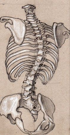 how to draw tears Anatomy Sketches, Anatomy Drawing, Art Drawings Sketches, Human Anatomy Art, Anatomy For Artists, Skeleton Anatomy, Skeleton Drawings, Ap Art, Art Sketchbook