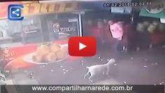 Homem tenta chutar um cão inocente e se deu mal!