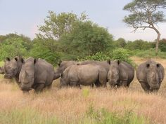 FIVE UNIQUE EXPERIENCES THAT ONLY AFRICA CAN OFFER 1. The Cradle of Humankind 2. Gorilla Trekking  3. Visit Victoria Falls  4. Madagascar  5. Safari  More @http://bit.ly/2dJtNsG #wildlife #safari #travel #rhino #culture #trip #animallovers #nature #beautiful #Africa #Uganda #adventure #thisisafrica #discoveruganda #explore #vacation #hoiliday