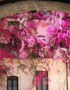 Bougainvillea covered old cottage
