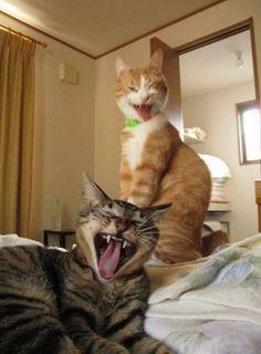 Lachende katten