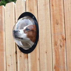 Pet Observation Porthole For Fences. A new way to creep out the neighbors.