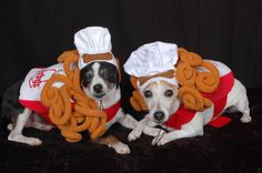 Bow wow wow, dog parents raised the Halloween bar this year in the Fourth Annual Fidose of Reality Halloween Dog Photo Contest Arby's Curly Fries, Cute Puppies, Cute Dogs, Dog Photo Contest, Halloween Costume Contest, Costume Ideas, Pet Costumes, Jack Russell Terrier, Dog Photos