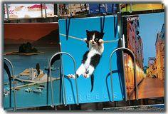 Postcat - Corfu, Kerkyra