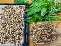 Před sušením můžete kořeny pampelišky nakrájet Dandelion Leaves, Dandelions, Beverages, Drinks, Korn, Coffee Recipes, Vegetable Recipes, Food Photo, How To Dry Basil