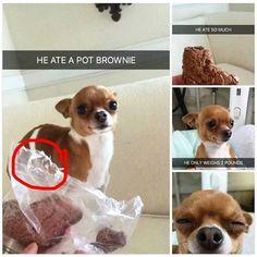 Cute, Dog, Brownie