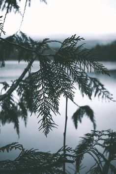 hannahkemp:    Rainy Trillium Lake//Oregon November 2016  The Best of Bushcraft and Survival - http://ift.tt/2lhc8iK