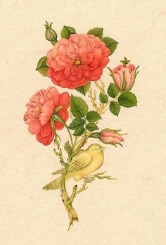 Mughal Nightingale and Roses Botanical Drawings, Botanical Art, Watercolor Flowers, Watercolor Art, Expressions Photography, Illumination Art, Islamic Paintings, Iranian Art, Illustrations And Posters