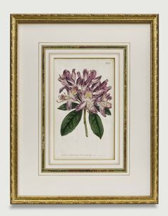 Gold frame accents a beautiful botanical and the marble paper draw the eye in, creating a stunning and traditional work of art. Framed to conservation standards with archival materials. Old Maps, Antique Maps, Antique Prints, Types Of Art, Custom Framing, Decor Styles, Concept, Fine Art, Antiques