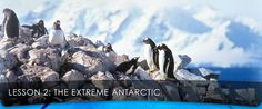 Scholastic/SeaWorld Lessons about Antarctica and Penguins  Great activity lessons!