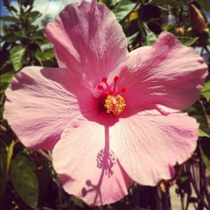 Puerto Rico's national florest is flor de maga or Amapola... This is the flower that appear on the Puerto Rico's quater