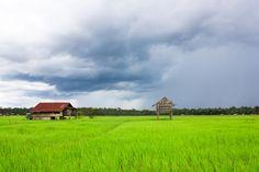 Beautiful rice fields in #Laos. #travel #AdventureHoney