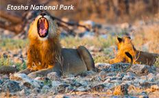 Namibia Wildlife Resorts is a State owned enterprise, mandated to run the tourism facilities within the protected areas of Namibia. Brown Bear, Resorts, Tourism, National Parks, Wildlife, Africa, Management, Animals, Organizations