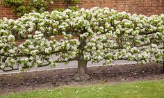 Potager Garden Ideas – Greenest Way Fruit Garden, Garden Trees, Edible Garden, Potager Garden, Garden Landscaping, Herbs Garden, Landscaping Ideas, Espalier Fruit Trees, Colonial Garden