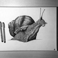 Snail by BrodeeLeonard on DeviantArt - Brigitte Pencil Art Drawings, Art Drawings Sketches, Cool Drawings, Animal Sketches, Animal Drawings, Snail Art, Petit Tattoo, Realistic Sketch, Scratchboard Art