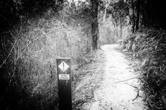 Blind Corner (2016). I only saw the 'Blind Corner' signs after rounding the corner. Is it not the same in the other direction? Aireys Inlet, Vic. Australia. Image: © Gary Light. Creative Commons: (CC BY-NC-ND 4.0). #photography #hiking #walking #nature #landscape #victoria #australia #forest #aireysinlet