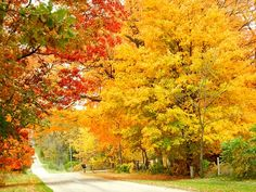 """""""Fall Splendor"""" - Steve Hoffacker - www.stevehoffacker.com/Gallery.html"""