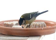 Pralinen für die Vögel