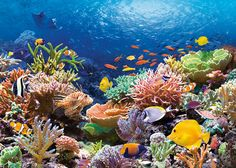 Rainbow Coral - Find incredible deals on Rainbow Coral and Rainbow Coral accessories. Let us show you how to save money on Rainbow Coral NOW! Great Barrier Reef, Ocean Art, Ocean Life, Coral Reef Pictures, Especie Animal, Underwater Life, Ocean Creatures, Tier Fotos, Tropical Fish