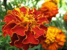 katifes Flower Garden, Plants, Garden, Bougainvillea, Rose, Flowers, Nature
