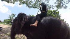 Cycling in Ayutthaya - Colors of Ayutthaya - 20200521 Gott