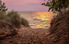 Our editor in chief takes a classic family road trip to an artsy Lake Michigan shore town for sandy beaches, gallery-peeping and great food. Fennville Michigan, Saugatuck Michigan, Cottage Names, Family Destinations, Family Road Trips, Beach Town, Sandy Beaches, State Parks, Coastal