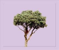 SHAUN WAUGH PHOTOGRAPHY: Landscapes