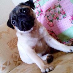 Peppa Pug