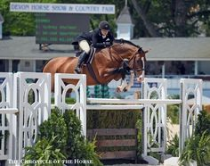 Cosmeo and Sydney Shulman in the Hunter Derby at the 2016 Devon Horse Show