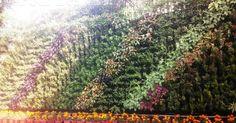 http://fourscape.com/vertical-garden-delhi-india-four-leaf-landscape-pvt-ltd/
