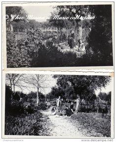TUNISIE - LE KEF 1941 - LA RECOLTE DES OLIVES - LOT DE 2 PHOTOS 11 X 7 CM