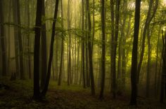 Secret Woods #1 on Behance