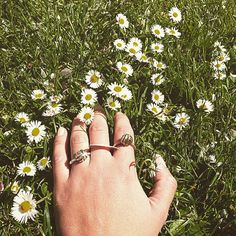 The pure, sculptural, layered rings look right at home in a field of daisies