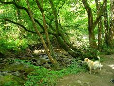Dog walks: enniskerry - woodland walk | A dog's paw Dog Paws, Dog Walking, Walks, Woodland, Your Dog, Dogs, Plants, Animals, Animales