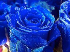 flores azuis - Pesquisa Google
