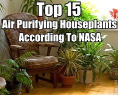 Top 15 Air Purifying Houseplants According To NASA